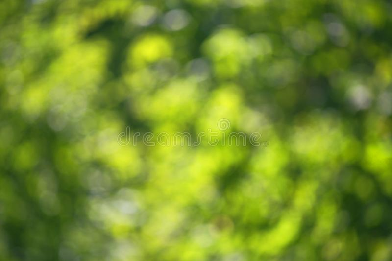 Bokeh juicy green leaves stock images