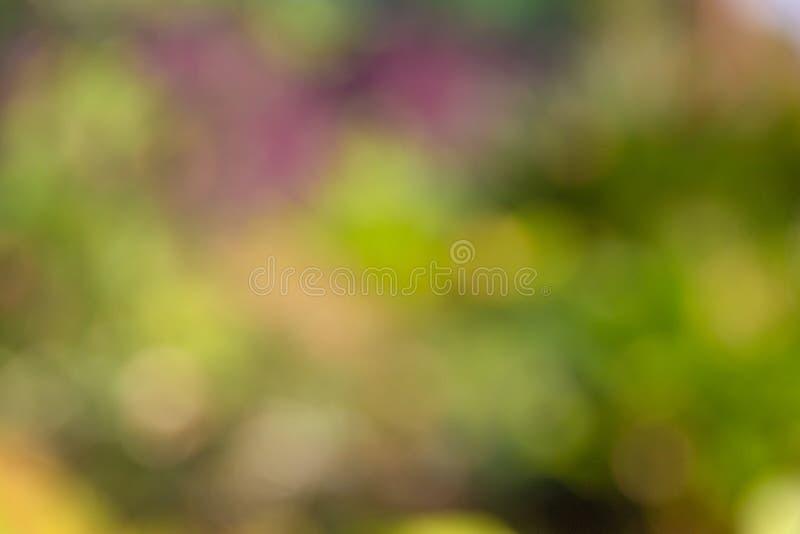 Bokeh l?ger abstrait Defocused de lumi?re sur l'arbre, fond abstrait photo stock