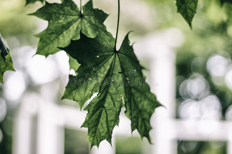 Bokeh leaves nature blog photo. Green leaves with white bokeh. Perfect photo for lifestyle blogger royalty free stock photo