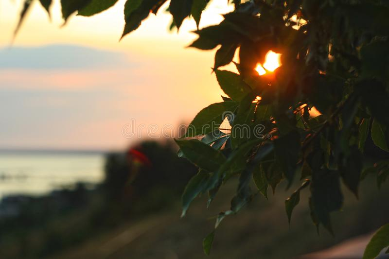Bokeh lights. A ray of sunshine makes its way through the green foliage of a tree royalty free stock photo