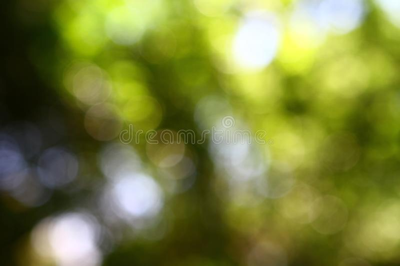 Bokeh natural yellow - green background. Park with trees on a sunny summer day. Creative still stock photo