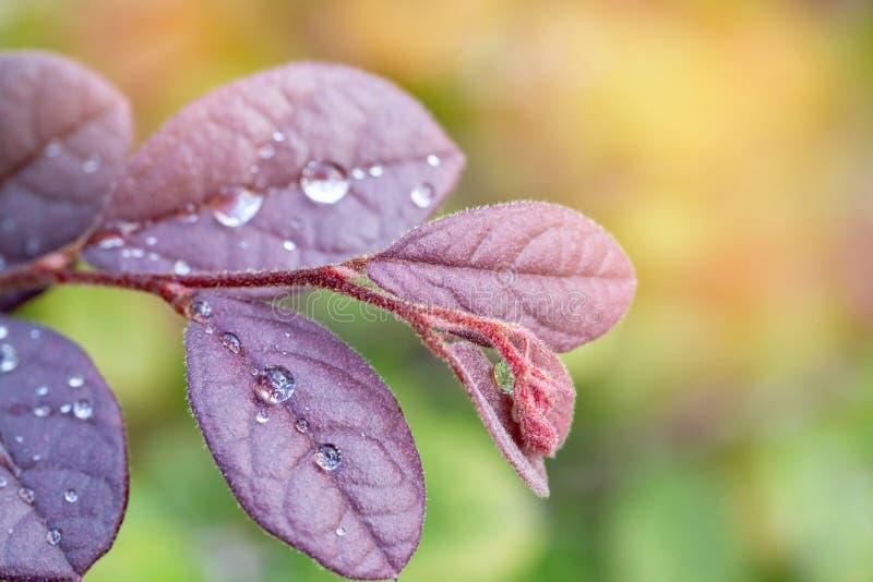 Bokeh obrazek wodna kropelka od rośliny brać po deszczu obrazy stock
