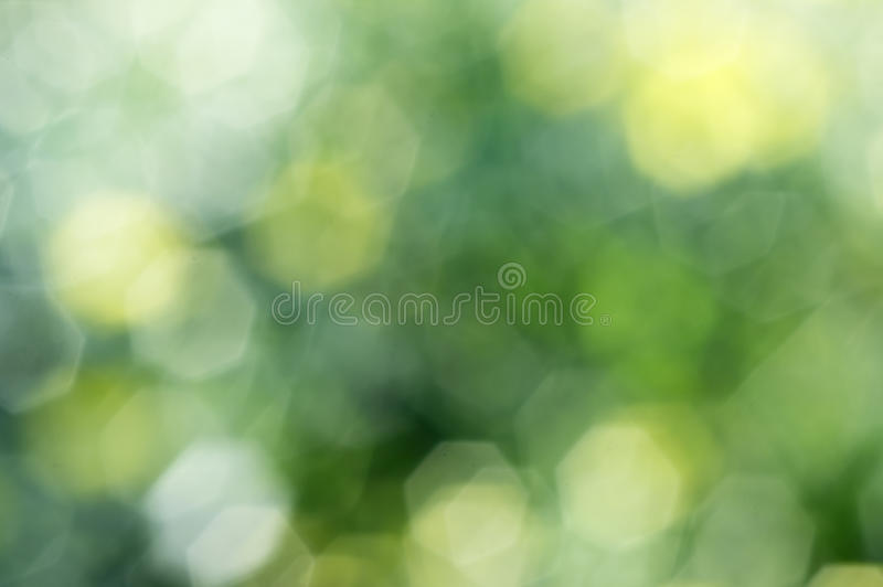 Bokeh and out of focus. Chrysanthemum flowers are intentionally blurred, out of focus bokeh can see royalty free stock images