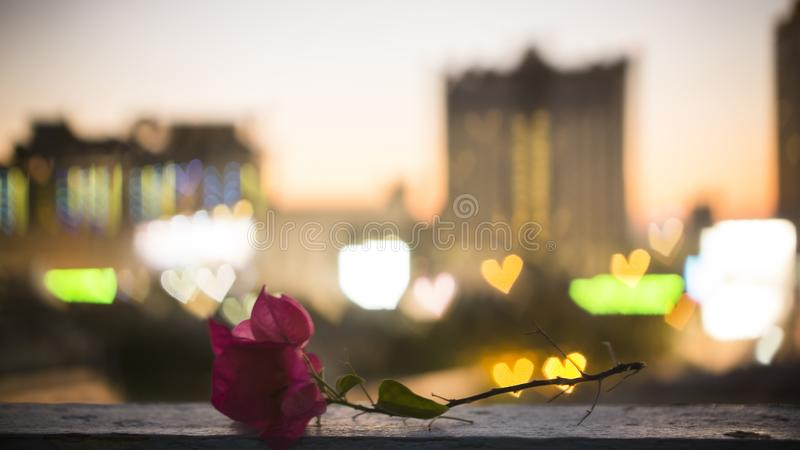 Bokeh photo of a red Paper flower on old wall, blurred red, yellow, blue and white hearts light, shape of shiny lights from the. City in background, under dark royalty free stock photo