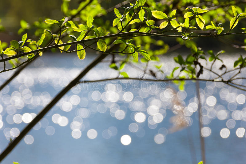 Bokeh reflections on lake, spring young leaves stock photos