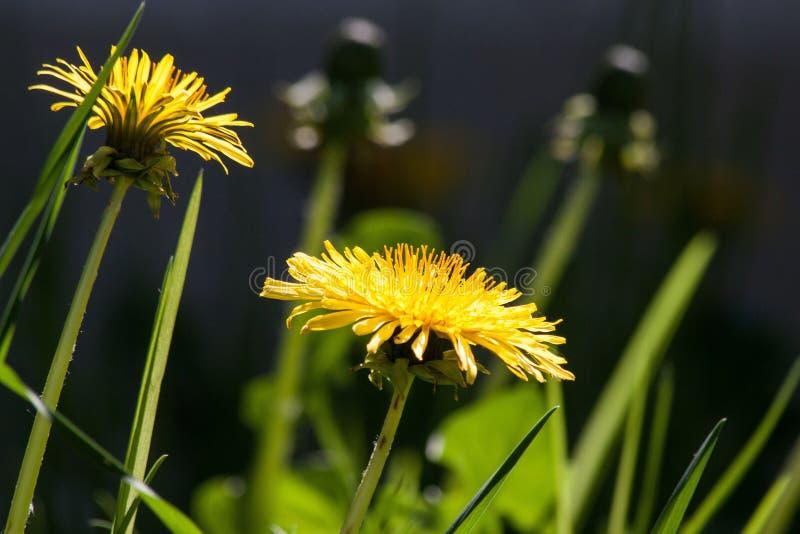Bokeh Shot of Yellow Flower during Daytime royalty free stock images
