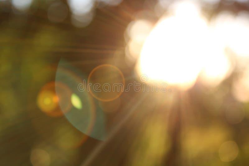 bokeh unscharfes Sonnenlicht stockbilder