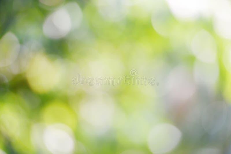 Bokeh verde do fundo abstrato do borrão fora de foco na floresta da natureza imagens de stock