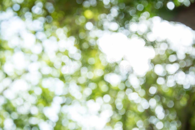 Bokeh verde e azul do ver?o para o fundo bokeh da ?rvore e do fundo verde pastel de Bokeh Foto borrada foto de stock