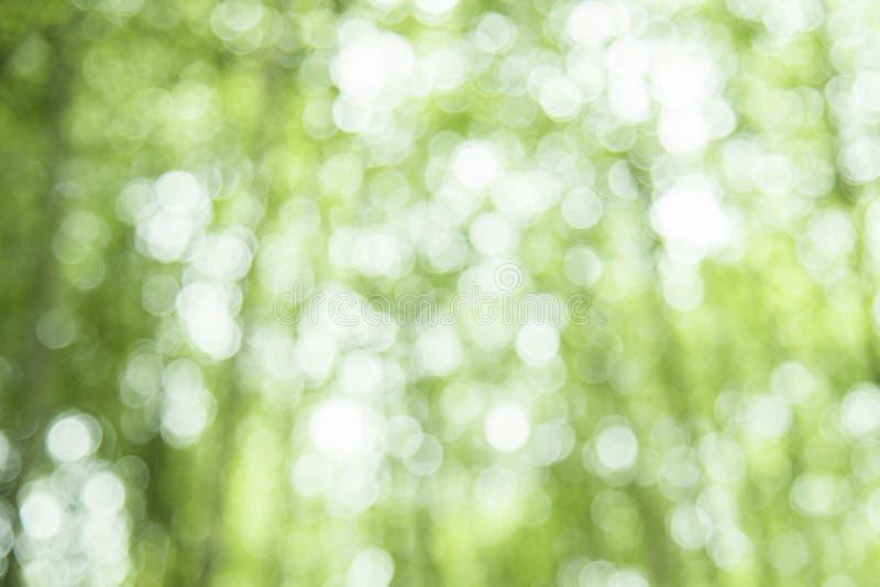 Bokeh verde en fondo del extracto del defocus de la naturaleza bokeh del verde de la falta de definición del bosque de bambú imagen de archivo