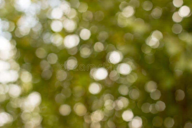Bokeh verde fora de foco imagens de stock