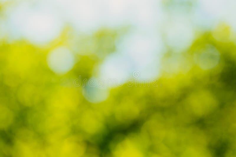 Bokeh verde fuera del fondo del foco del bosque de la naturaleza imagen de archivo libre de regalías