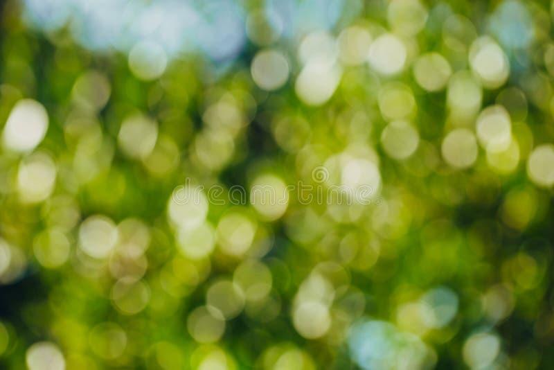 Bokeh verde fuera del fondo del foco del bosque de la naturaleza imagenes de archivo
