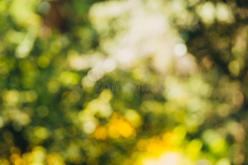 Bokeh verde fuera del fondo del foco del bosque de la naturaleza foto de archivo libre de regalías
