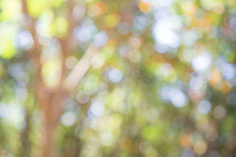Bokeh verde no bokeh do verde do fundo do borrão do sumário da natureza da árvore Zombaria acima para a exposição imagem de stock royalty free