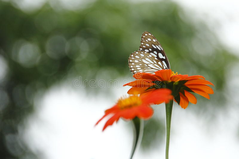 Bokeh. Wonderful bokeh in a natural when you zoom your lens stock photography