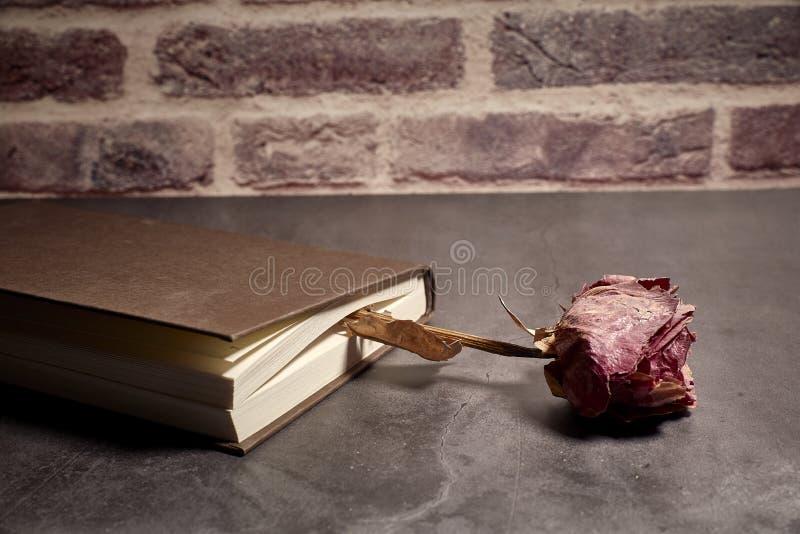 Boken stängde sig med en torr ros mellan dess sidor royaltyfria bilder