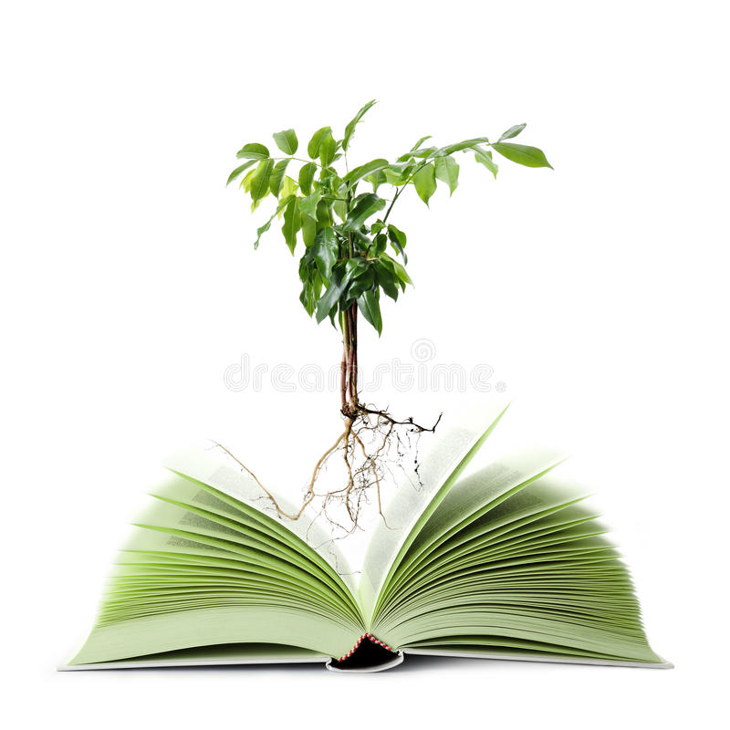 bokgreen royaltyfri bild