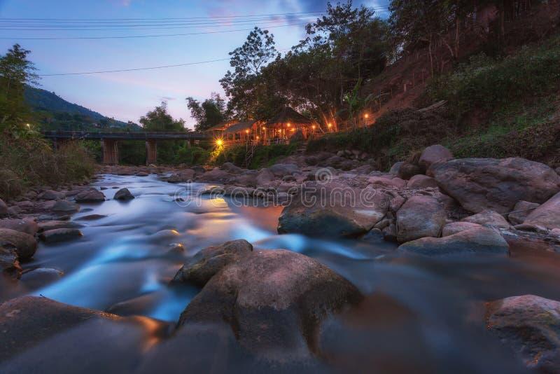 Boklua-Strom im Norden östlich Nan-Provinz, Thailand lizenzfreie stockfotos