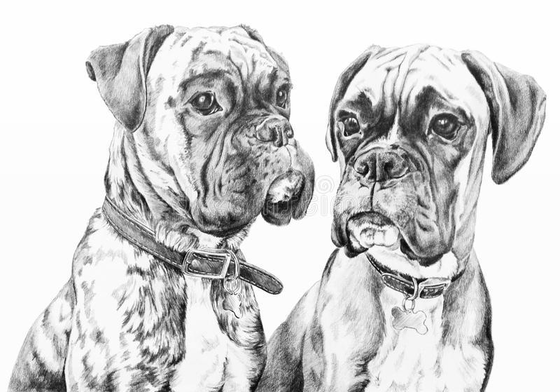Bokserów psy royalty ilustracja