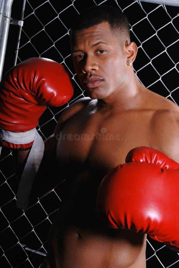 boksera mężczyzna zdjęcie royalty free