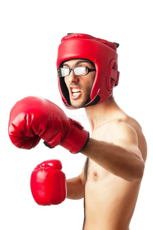 boksera odosobniony śmieszny fotografia stock