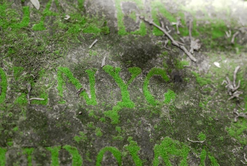 Bokstäver på gravvalvet av det 19th århundradet som är bevuxet med mossa Forgott royaltyfri bild
