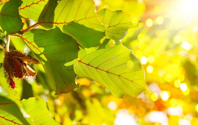 Bokträd i solskenet, färgrik höst royaltyfri bild