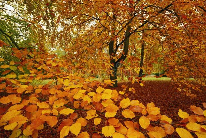 Bokträdet i parkerar fotografering för bildbyråer