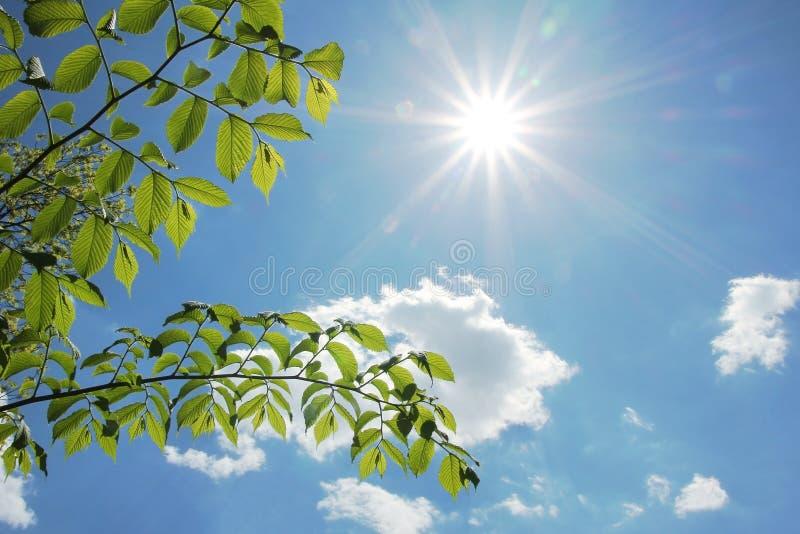 Bokträdsidor och ljust solsken på vår fotografering för bildbyråer