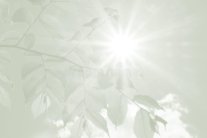 Bokträdsidor och strålar av hopp, sympatibakgrund arkivfoto