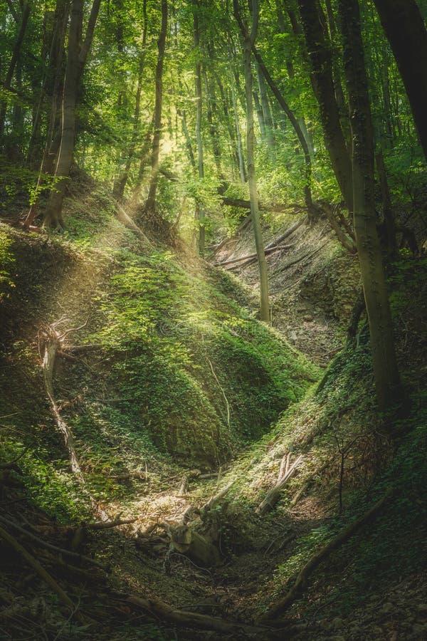 Bokträdskog i fjäder royaltyfria foton