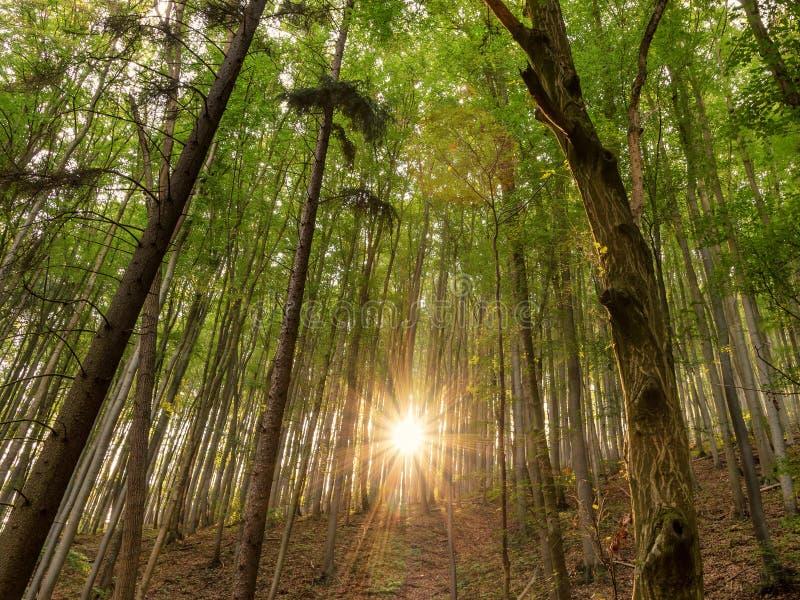 Bokträdskog med solstrålarna av ljus arkivfoto