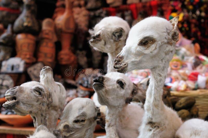Bolívia étnica imagens de stock