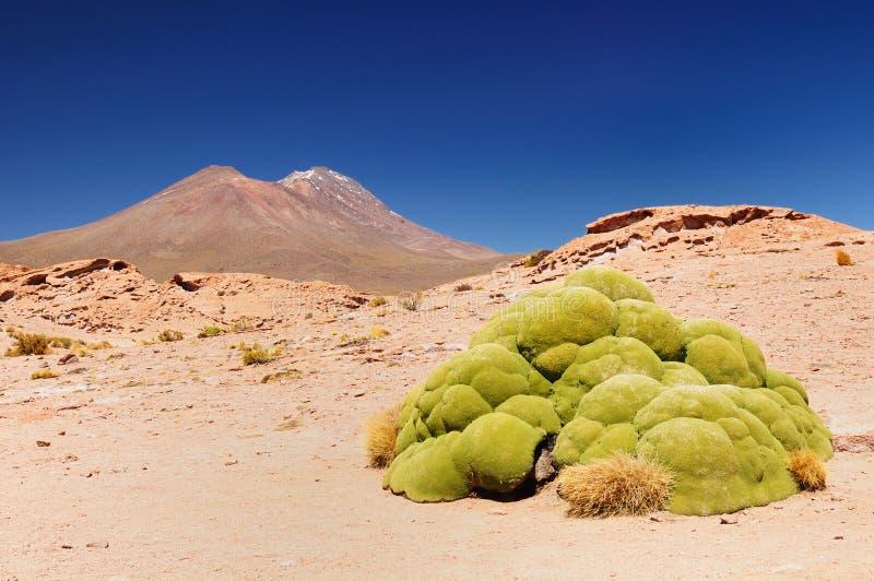 Bolívia - parque nacional de Eduardo Avaroa fotos de stock royalty free