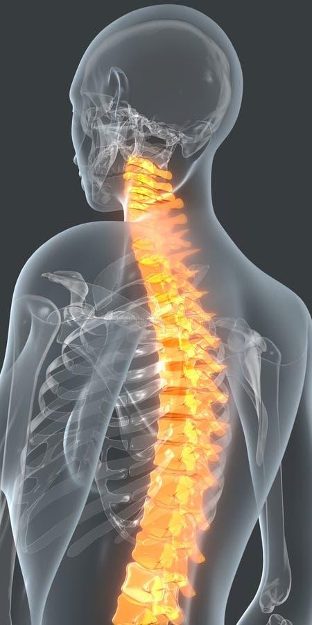 bolącego plecy łóżka bolący target759_0_ wizerunku uraz target762_0_ męskiego mężczyzna mięśnia szyi bólu stronniczo surowego ram ilustracji