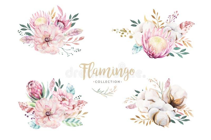 Bola de algodão ajustada floral do wirh do boho da aquarela, flor do protea Quadro natural boêmio da grinalda: folhas, penas, flo ilustração stock