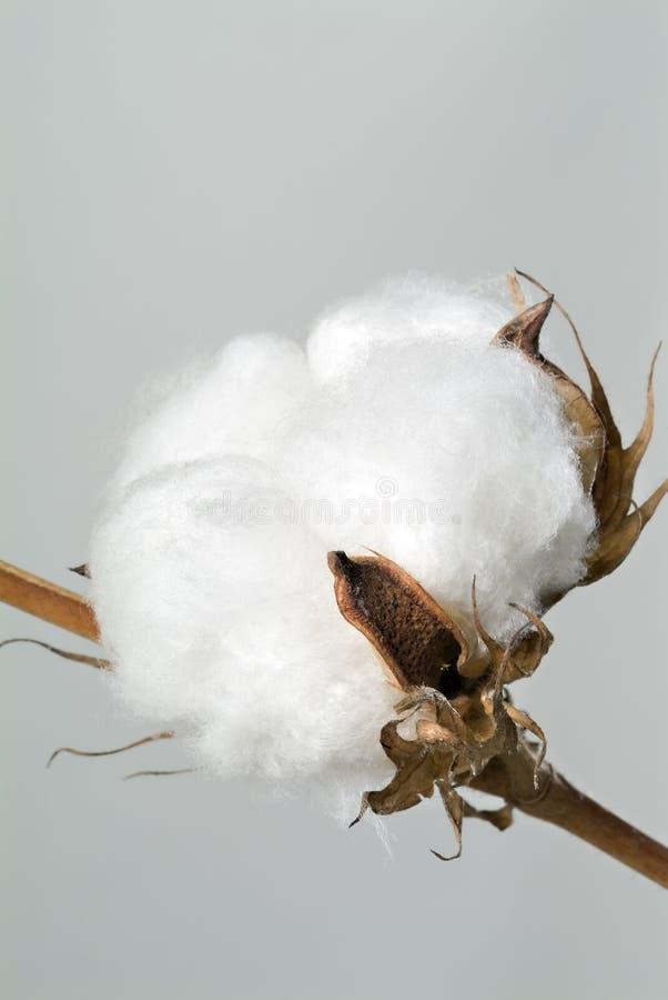 Bola de algodón imagen de archivo libre de regalías