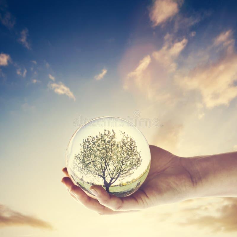 Bola de cristal con un árbol en el cielo de la puesta del sol foto de archivo libre de regalías