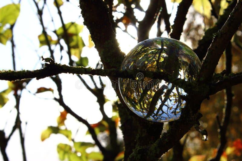 Bola de cristal en el árbol fotos de archivo