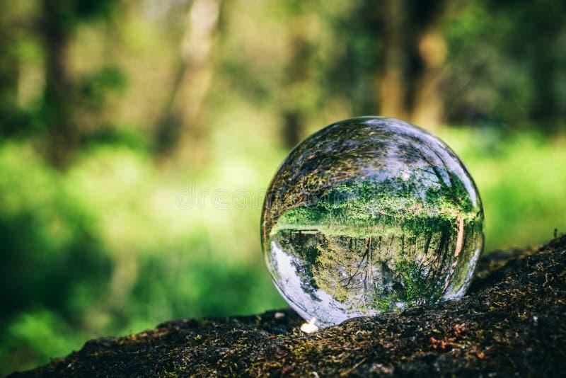 Bola de cristal que se coloca en un tronco, reflejando un bosque imágenes de archivo libres de regalías