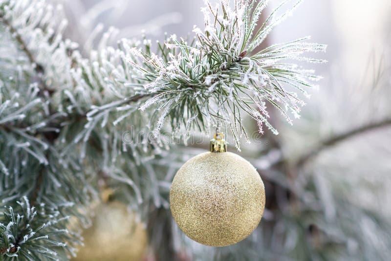 Bola de la Navidad del oro en una rama de árbol nevada foto de archivo libre de regalías
