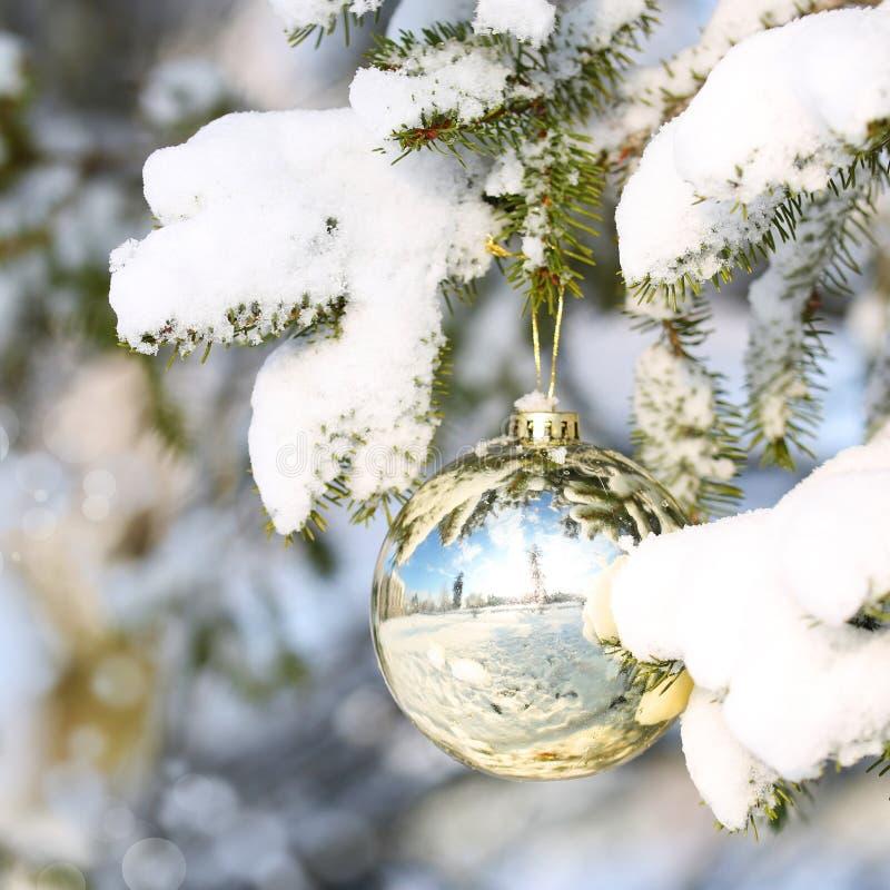 Bola del oro de la Navidad en la rama de árbol de navidad cubierta con nieve. fotografía de archivo