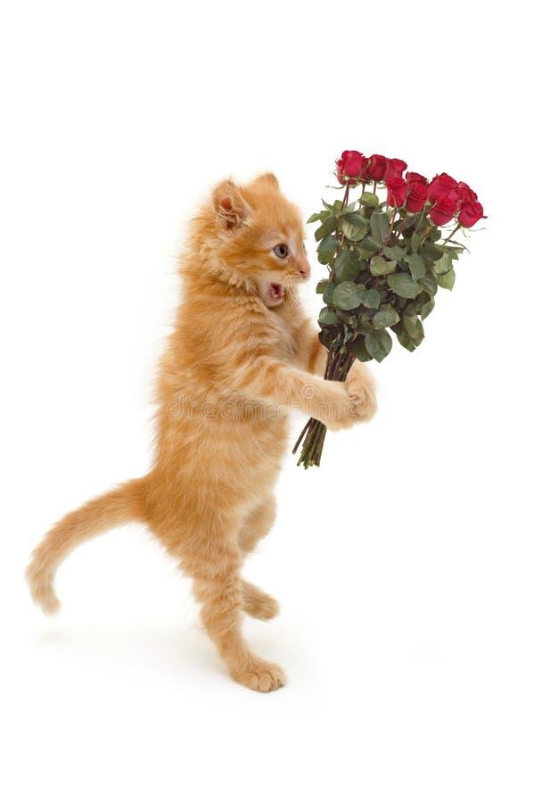 Bola del retén del gatito imagen de archivo libre de regalías