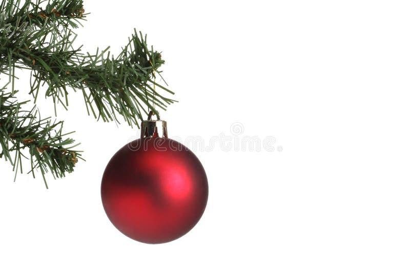 A bola do Natal pendurou em um ramo do abeto de uma árvore de Natal com o espaço da cópia isolado no fundo branco fotos de stock