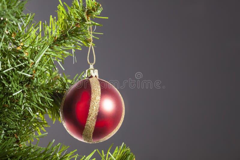 A bola do Natal pendurou em um ramo de árvore do Natal com espaço da cópia no fundo cinzento fotos de stock royalty free
