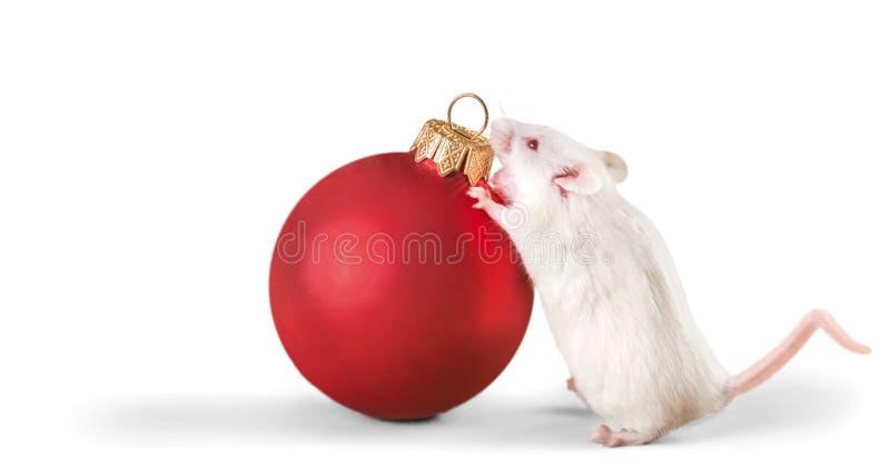 Bola e rato decorativos do Natal sobre imagem de stock royalty free
