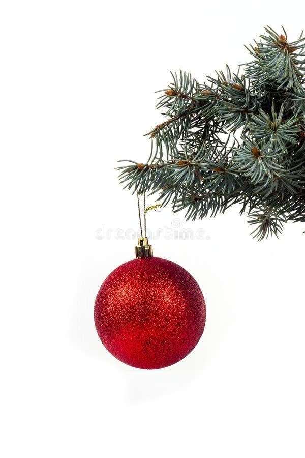 Bola en una rama foto de archivo libre de regalías
