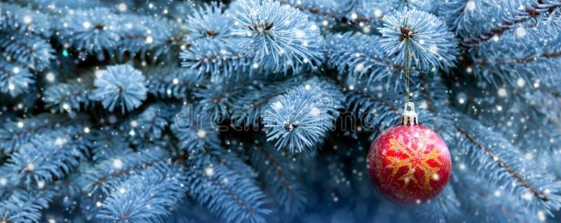 Bola roja de la Navidad en la rama del abeto fotos de archivo libres de regalías