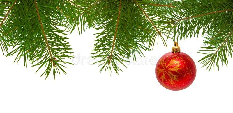 Bola roja de la Navidad en la rama del abeto aislada imagen de archivo